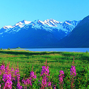 Mountains and Fireweed